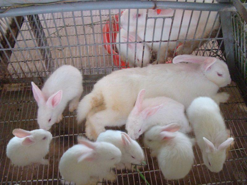 Giá các loại thỏ kiểng hiện nay. Địa chỉ bán thỏ kiểng ở TPHCM