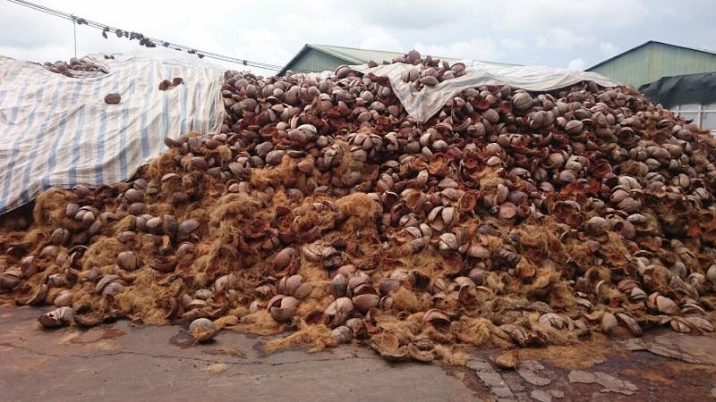 Giá xơ dừa hiện nay. Địa chỉ bán xơ dừa tại Hà Nội và TPHCM